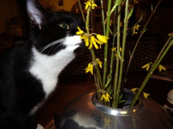 Diesel eating flowers