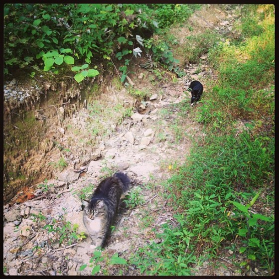 hiking with Riley and Diesel